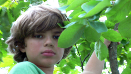 Alex in the Trees.  (2007)