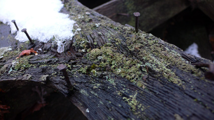 Old nails in old wood with a touch of snow.  (2007)